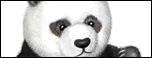 Peeking Panda